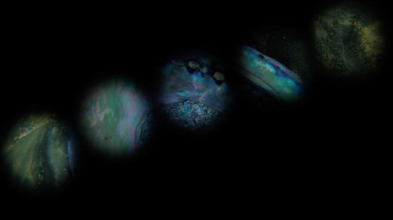 Abalone apertures maya v