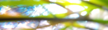 alkfjlkf